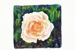 Mother-of-Pearl-Rose
