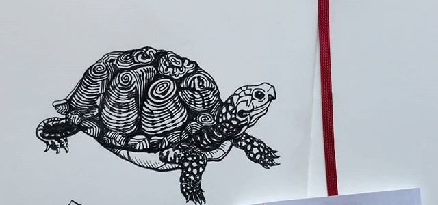 Turtle Sketches