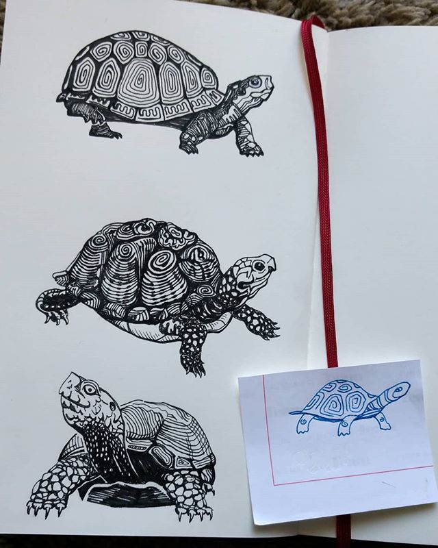 Exploring turtle sketches for a current logo branding project